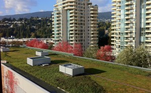 Self Storage West Vancouver Green Roof